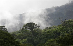 Costa Rican cloud forest